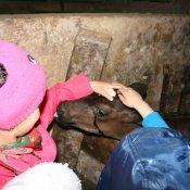 Wizyta przedszkolaków w gospodarstwie wiejskim