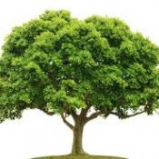 Uratowaliśmy 85 drzew!