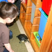 Żółwik Henryk odwiedził Biedronki