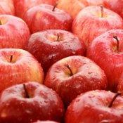 Zapraszamy po odbiór jabłek