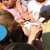 Przedszkolaki odwiedziły gołębie