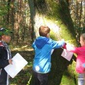 Klasa II b odkrywa tajemnice lasu i świętuje Dzień Chłopca