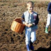 Przedszkolaki na jesiennych wykopkach