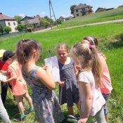 Co kryje letnia łąka? - obserwacje pierwszaków